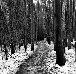Mike Dennett A Wood in Winter