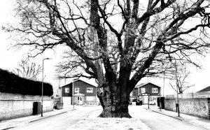 Mike Dennett Tree in Winter