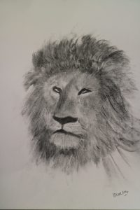 Sally Waters - Lion Charcoal and Pencil